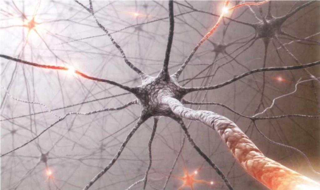 A benzocliazepinek az agyi ingerületátvitelt befolyásolják. Megakadályozzák, hogy az élénkítő vegyületek kifejthessék hatásukat.