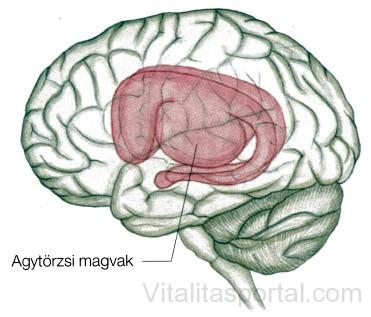 Parkinson agy