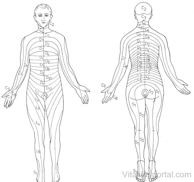 A dermatomák elhelyezkedése az emberi testen